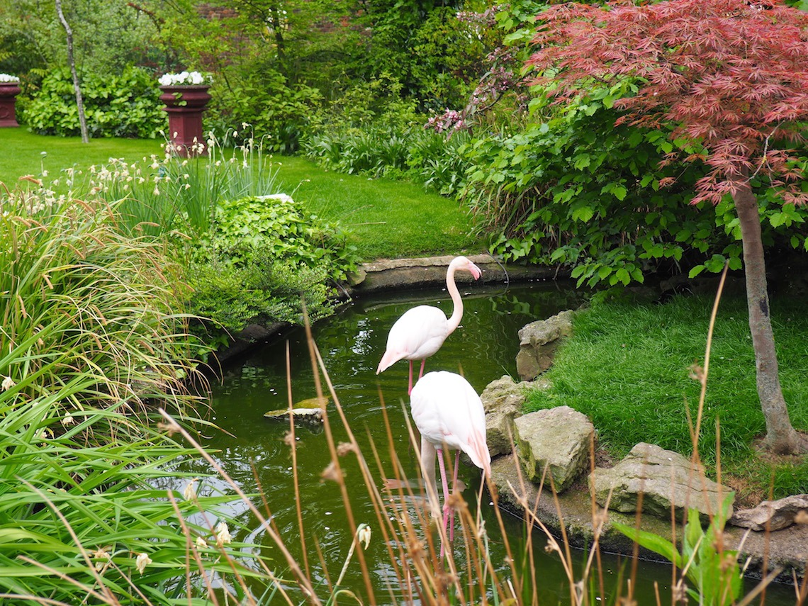 Flamingos in the English Woodland Garden
