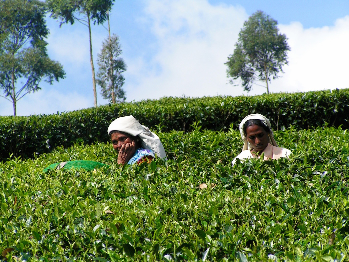 Tea picking in Sri Lanka (taken on a previous trip)